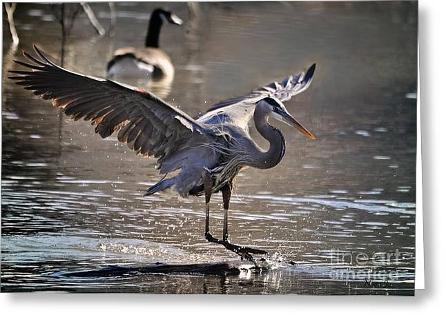 Great Blue Heron Skiing Greeting Card by Nava  Thompson
