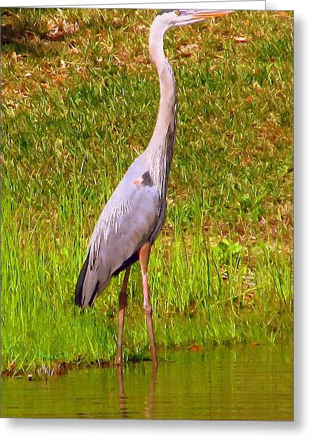 Oil Like Digital Greeting Cards - Great Blue Heron VIII Greeting Card by Buzz  Coe