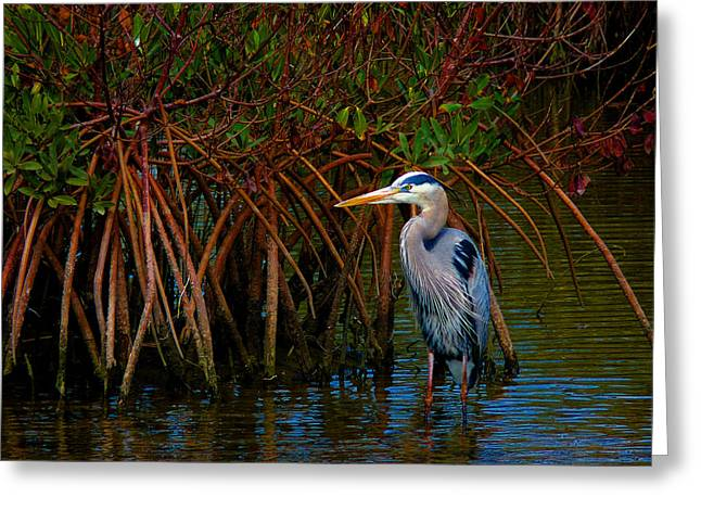 Family Of Doctors Greeting Cards - Great Blue Heron Wading Among Mangroves Greeting Card by Susan Duda