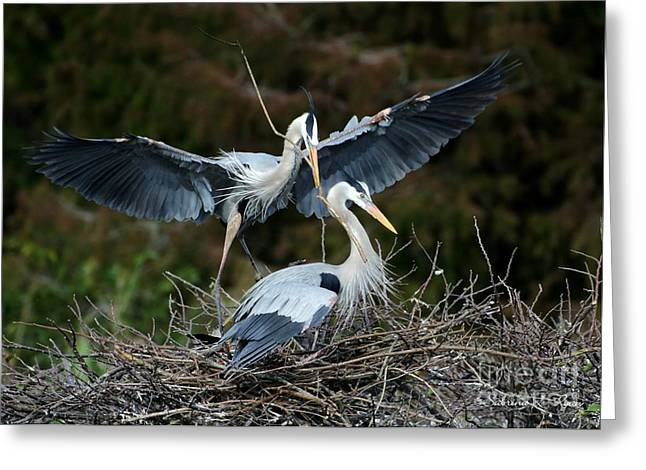 Great Blue Herons Nesting Greeting Card by Sabrina L Ryan