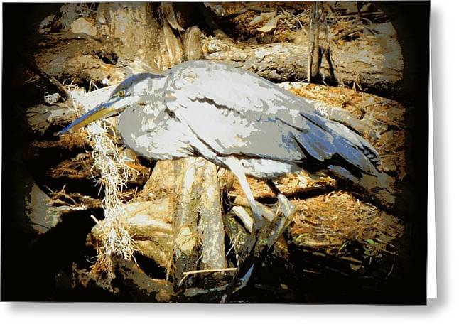Great Blue Heron Framed Print Greeting Cards - Great Blue Looking for Fish 1 Greeting Card by Sheri McLeroy