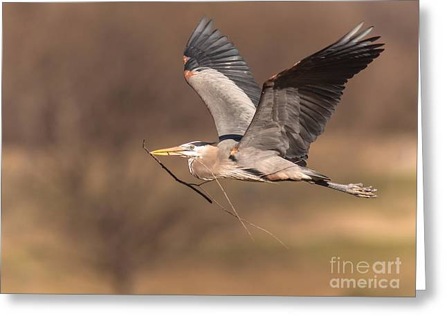 Cabin Window Greeting Cards - Great Blue To Rookery Greeting Card by Robert Frederick