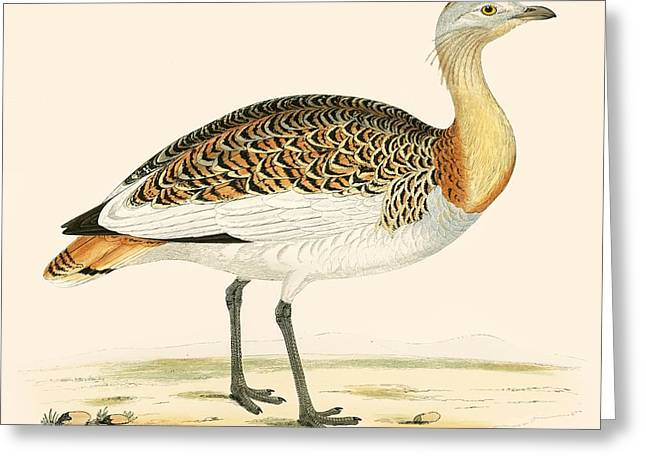 Hunting Bird Photographs Greeting Cards - Great Bustard Greeting Card by Beverley R. Morris
