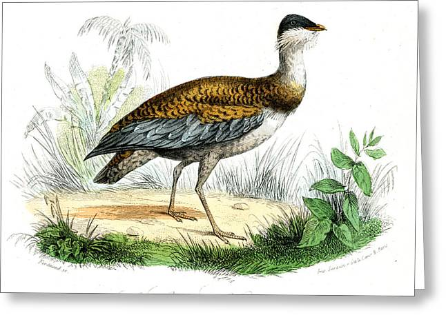 Great Bustard Greeting Card by Collection Abecasis