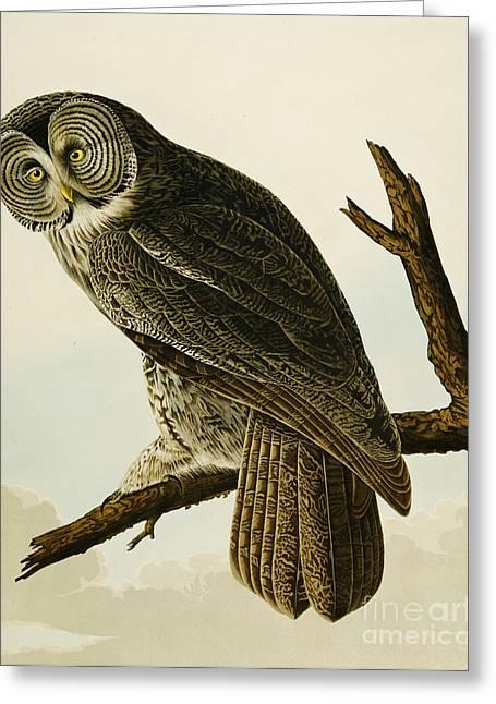 Audubon Greeting Cards - Great Cinereous Owl Greeting Card by John James Audubon