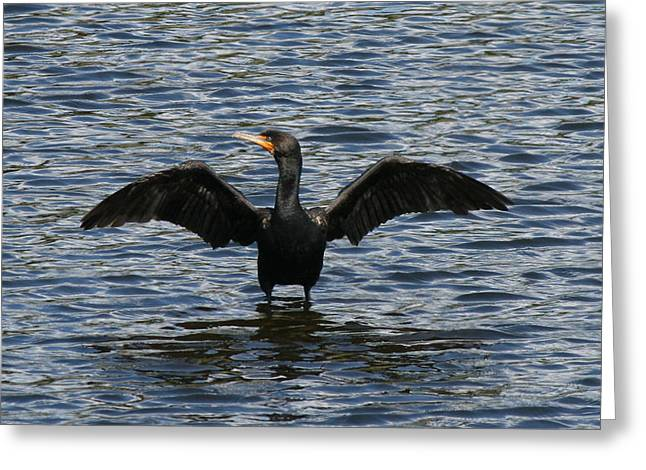 Nature Photos Greeting Cards - Great Cormorant Greeting Card by Neal  Eslinger