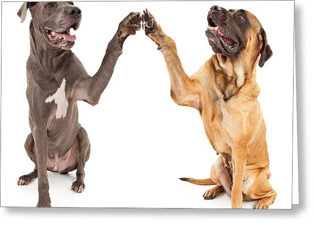 Great Dane And Mastiff Dogs Shaking Hands Greeting Card by Susan  Schmitz