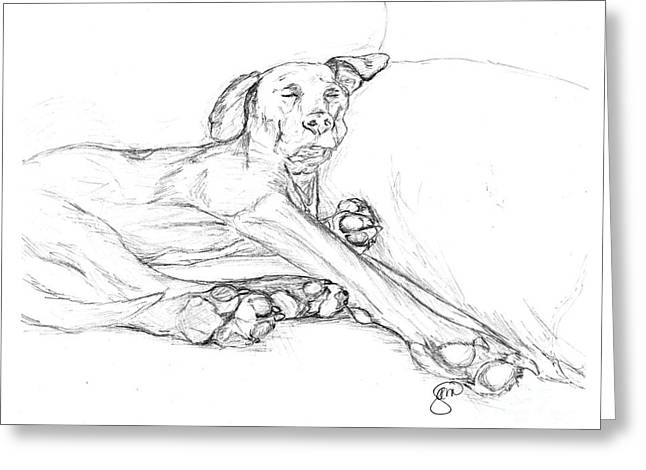 Great Dane Dog Sketch Bella Greeting Card by Stacey May