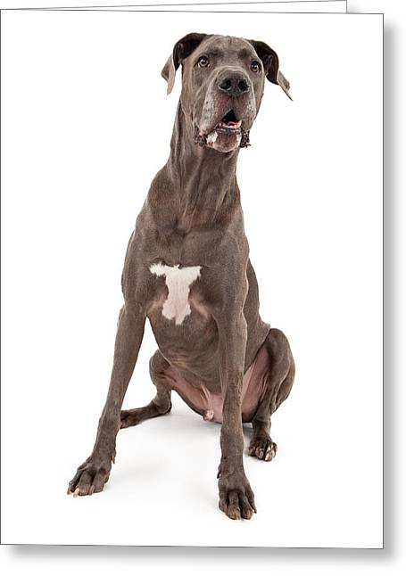 Obedient Greeting Cards - Great Dane Dog  Greeting Card by Susan  Schmitz