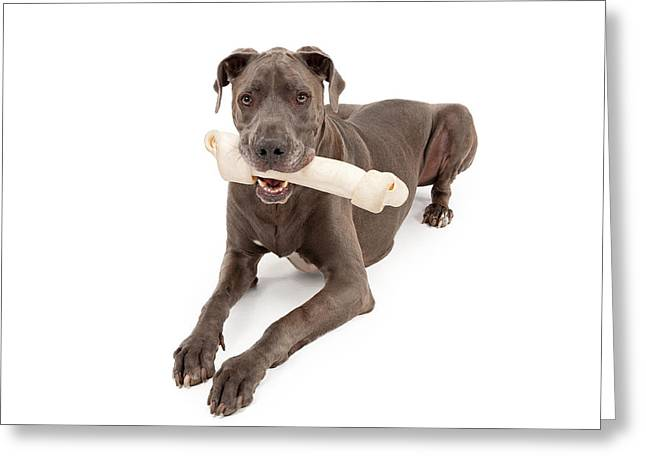 Rawhide Greeting Cards - Great Dane Dog With Large Bone Greeting Card by Susan  Schmitz