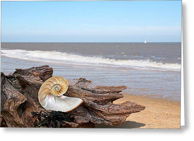 Geometric Artwork Greeting Cards - Great Day For Beachcombing - Driftwood and Shells Greeting Card by Gill Billington