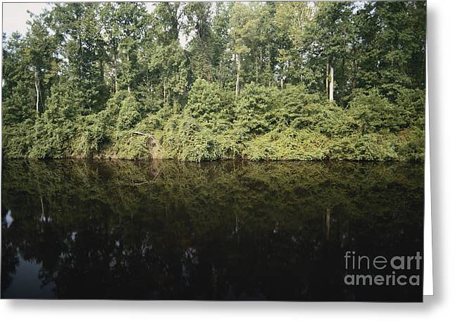 Dismal Greeting Cards - Great Dismal Swamp Greeting Card by Van D. Bucher