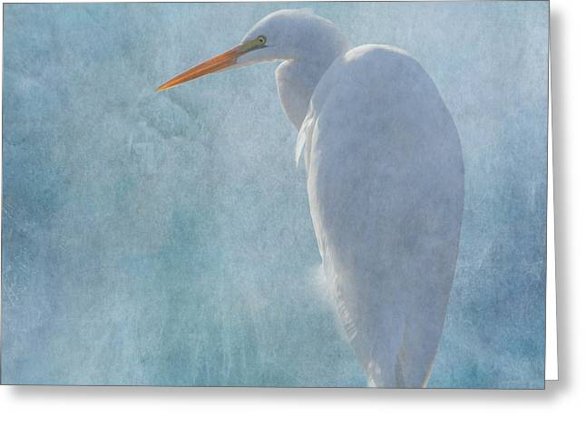 Wildlife Refuge. Greeting Cards - Great Egret 2 Greeting Card by Angie Vogel