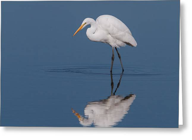 Hunting Bird Greeting Cards - Great Egret Greeting Card by Angie Vogel