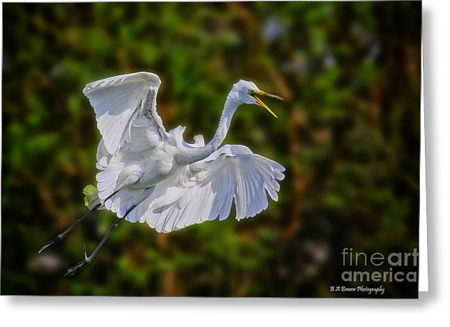 Pasco County Greeting Cards - Great Egret in flight Greeting Card by Barbara Bowen