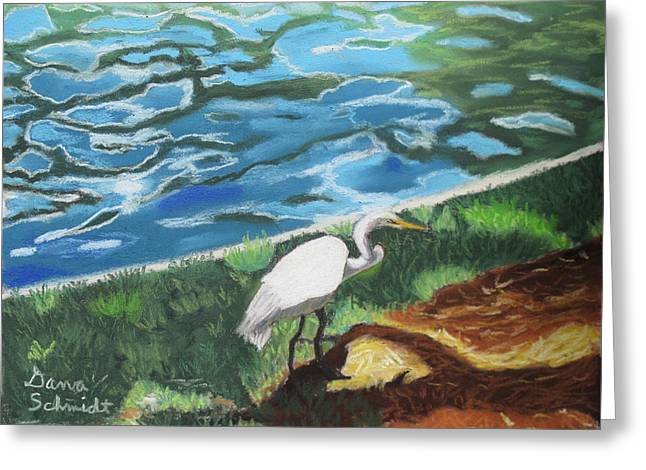 Great Birds Pastels Greeting Cards - Great Egret in Florida Greeting Card by Dana Schmidt