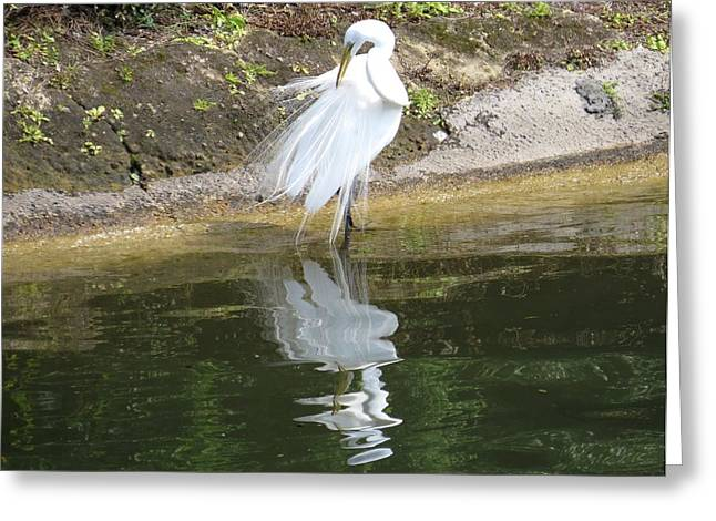 Seascape Greeting Cards - Great egret in the lake Greeting Card by Zina Stromberg