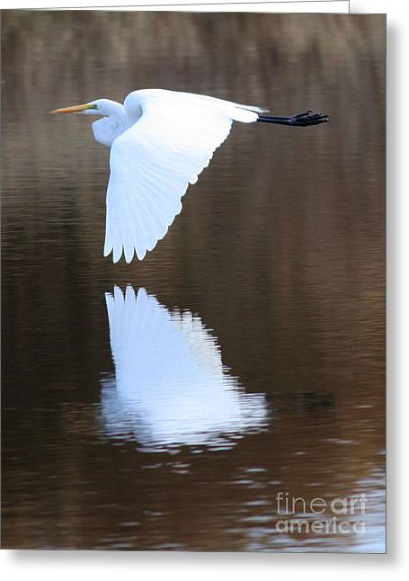 Egret Greeting Cards - Great Egret over the Pond Greeting Card by Carol Groenen