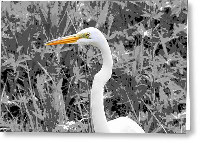 Flying Bird Mixed Media Greeting Cards - Great Egret Poster Greeting Card by Dan Sproul