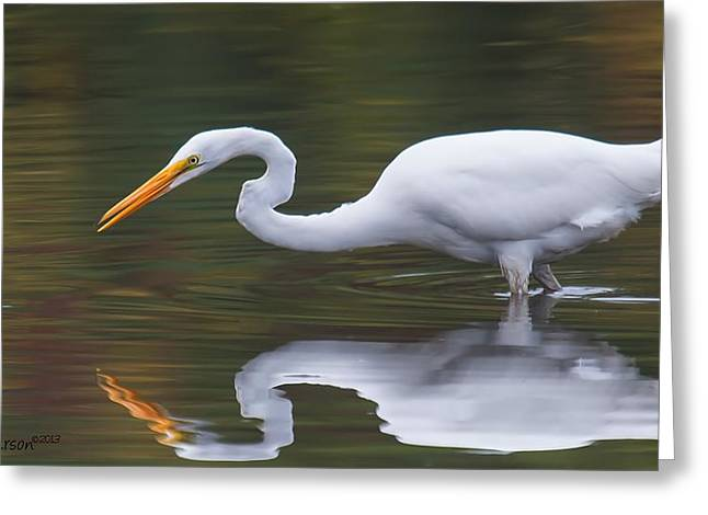 Courson Greeting Cards - Great Egret Reflection Greeting Card by CR  Courson