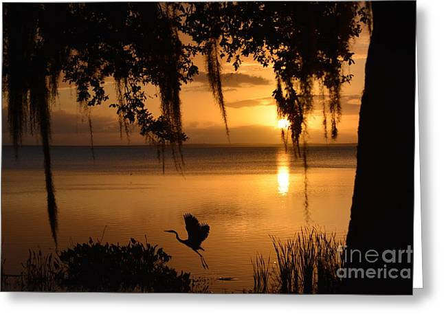 Great Egret Taking Off Greeting Card by Nicholas Outar