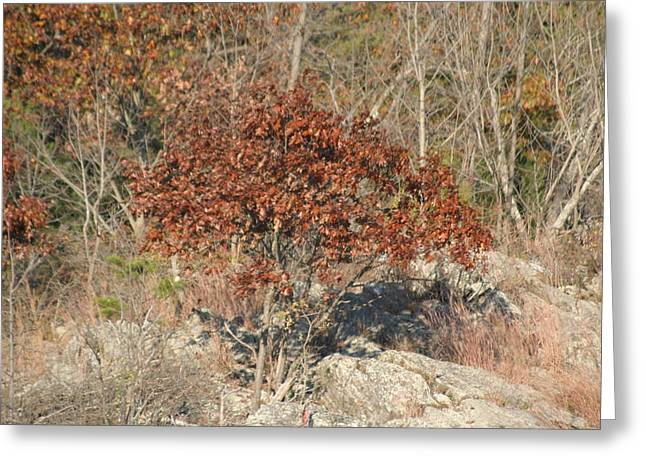 Parks Greeting Cards - Great Falls VA - 121234 Greeting Card by DC Photographer