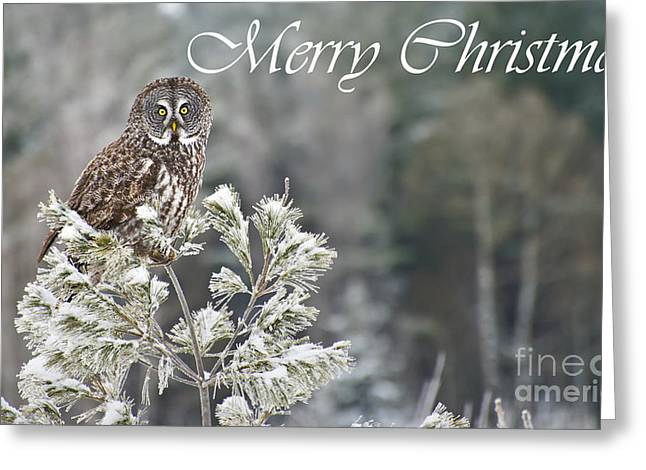 Nature Photograph Greeting Cards - Great Gray Owl Christmas Card 10 Greeting Card by Michael Cummings