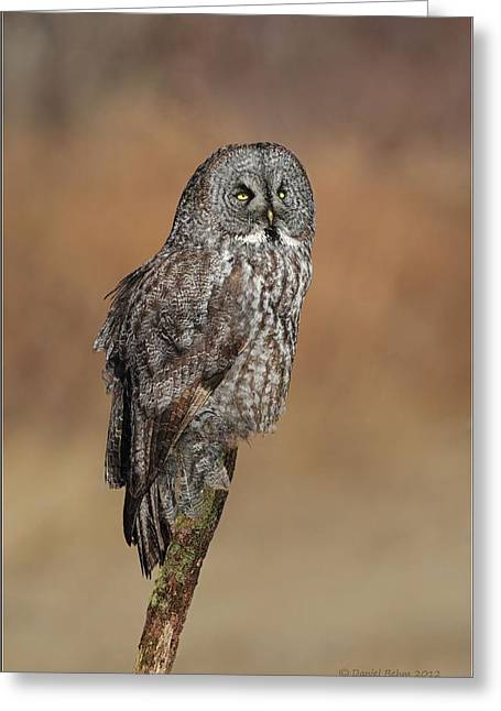 Great Birds Pyrography Greeting Cards - Great Gray Owl Greeting Card by Daniel Behm