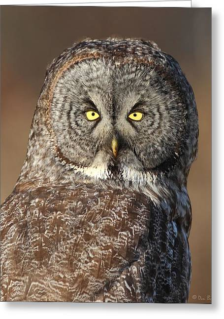Great Birds Pyrography Greeting Cards - Great Gray Owl Portrait Greeting Card by Daniel Behm