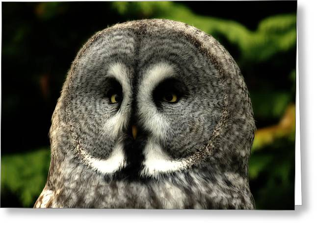 Lovely Owl Greeting Cards - Great Grey Owl Greeting Card by Mountain Dreams