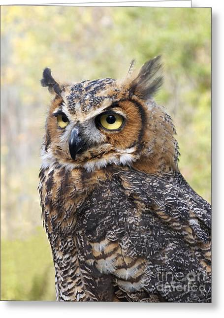Great Horned Owl Greeting Card by Ann Horn