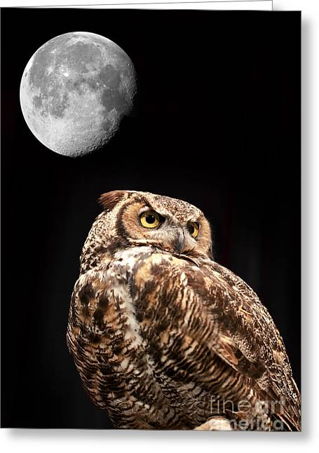 Nocturnal Animal Print Greeting Cards - Great Horned Owl Greeting Card by Brandon Alms