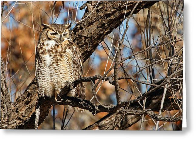 Great Horned Owl (bubo Virginianus Greeting Card by Larry Ditto