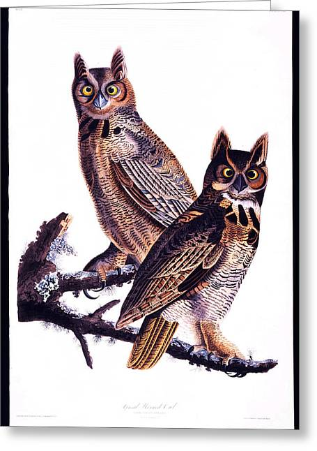 Espresso Prints Greeting Cards - Great horned owl Greeting Card by Celestial Images