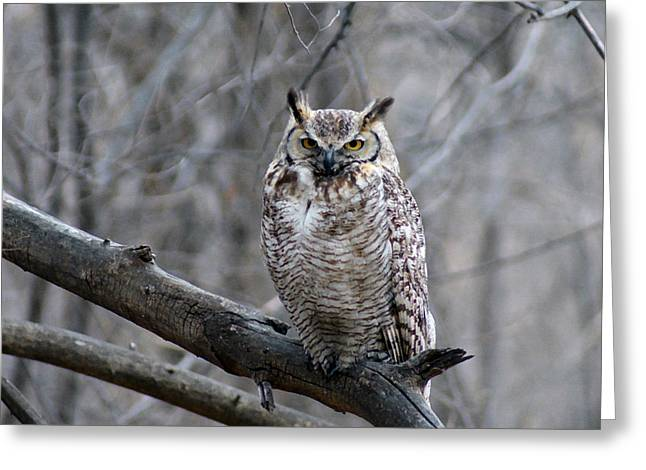Great Birds Digital Greeting Cards - Great Horned Owl Greeting Card by Ernie Echols