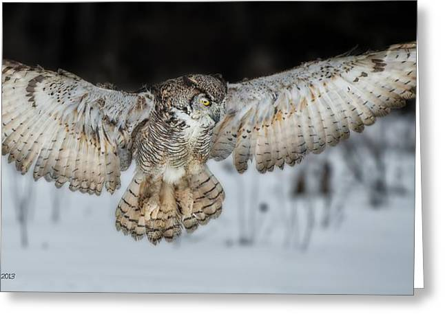 Courson Greeting Cards - Great Horned Owl Flight Greeting Card by CR  Courson
