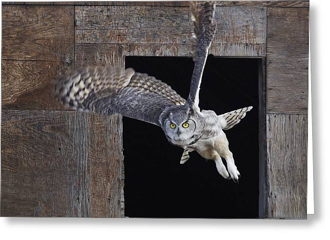 Great Horned Owl Flying Out Of An Old Greeting Card by Robert Postma