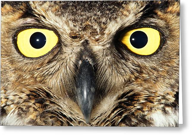 Animal Body Part Greeting Cards - Great horned owl Greeting Card by Frans Lanting MINT Images