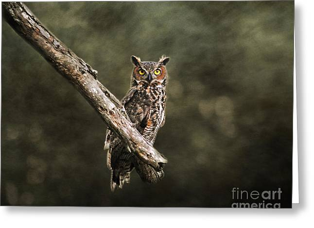 Great Horned Owl I Greeting Card by Jai Johnson