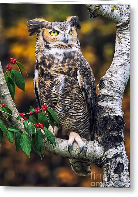 Photos Of Autumn Greeting Cards - Great Horned Owl III Greeting Card by Todd Bielby