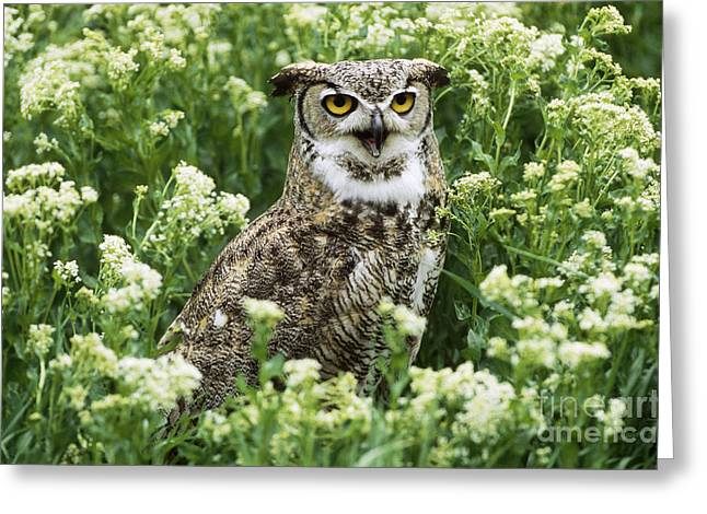 Wildlife In Captivity Greeting Cards - Great Horned Owl Greeting Card by Jeffrey Lepore