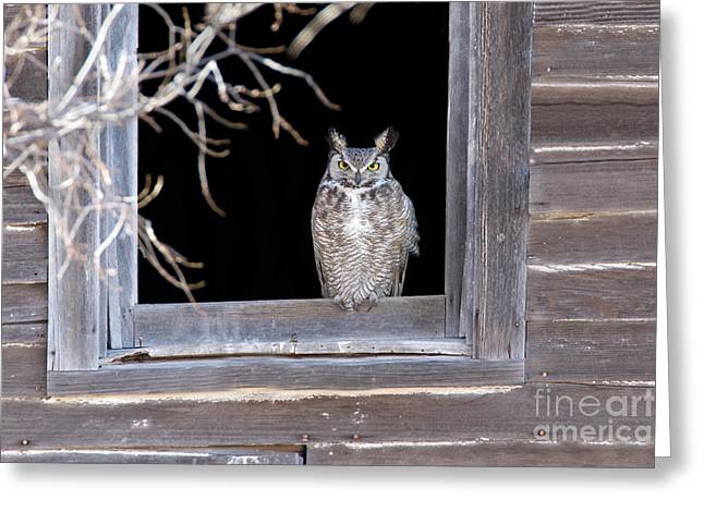 Us Wildllife Greeting Cards - Great Horned Owl Greeting Card by Jim Zipp