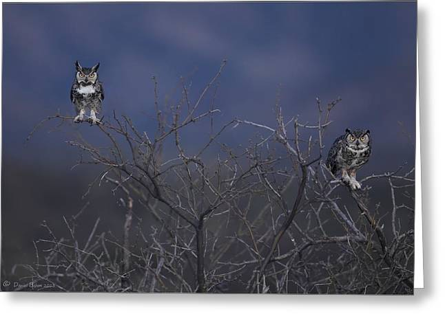 Great Birds Pyrography Greeting Cards - Great Horned Owl pair at Twilight Greeting Card by Daniel Behm