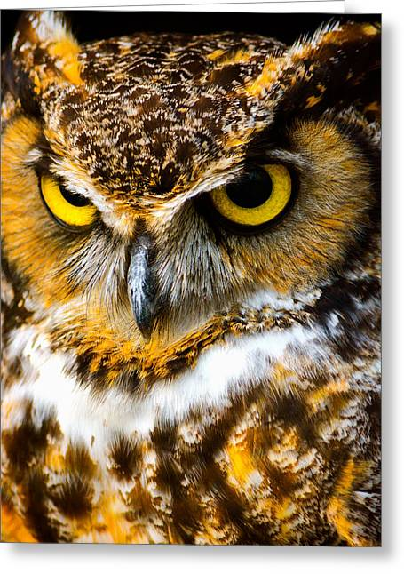 Owl Photography Greeting Cards - Great Horned Owl  Greeting Card by Parker Cunningham