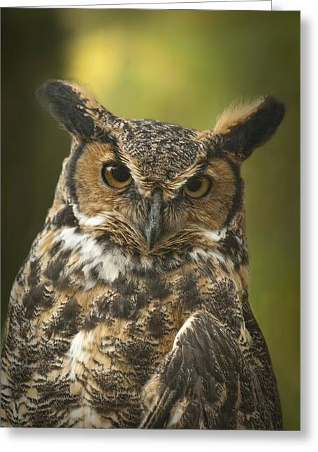 Great Horned Owl Greeting Card by Randall Nyhof