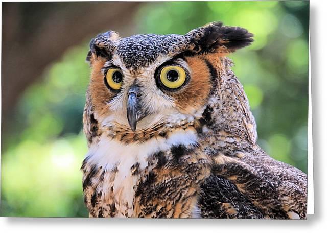 Rosalie Scanlon Greeting Cards - Great Horned Owl Greeting Card by Rosalie Scanlon
