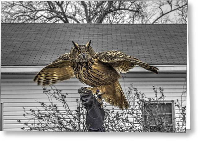 Hunting Bird Greeting Cards - Great horned owl v2 Greeting Card by John Straton