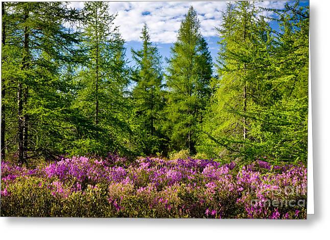 Spring In Maine Greeting Cards - Great Meadow Spring Greeting Card by Susan Cole Kelly