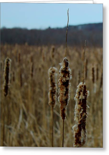 Concord. Winter Greeting Cards - Great Meadows Greeting Card by Jeff Heimlich