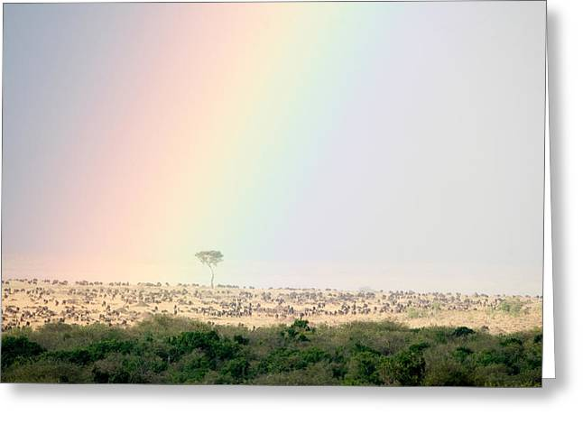 Colorful Photography Greeting Cards - Great Migration Of Wildebeests, Masai Greeting Card by Panoramic Images